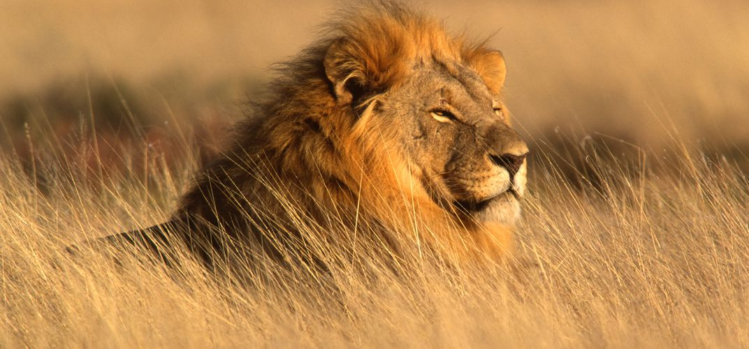 Tips to know before going on an African safari
